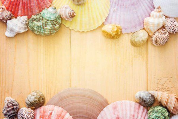 color sea shells